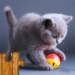 Cats Jigsaw Puzzles Games – For Kids & Adults 😺🧩 25.2 (crack download) APK MOD