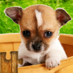Dogs Jigsaw Puzzles Game – For Kids & Adults  28.2 (crack download) APK MOD