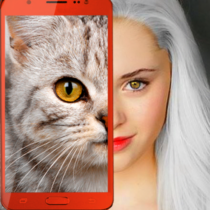 Kittens: what cat are you? prank 2.7 (crack download) APK MOD